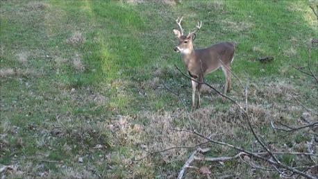 Buck1