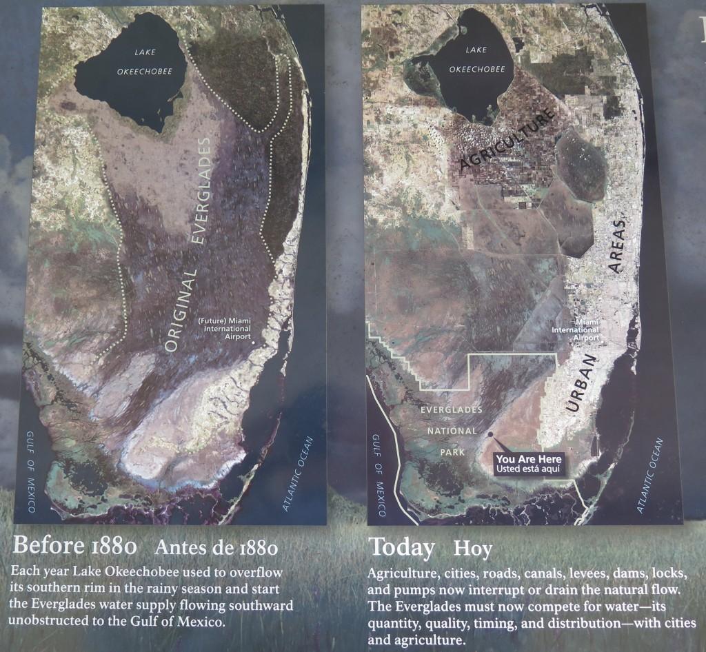 20160214 Everglades IMG_0254 (2)