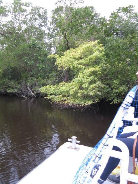 20160214 Everglades IMG_0267 (Custom)