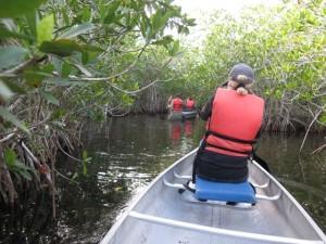 20160215 Everglades IMG_0275 (Custom)