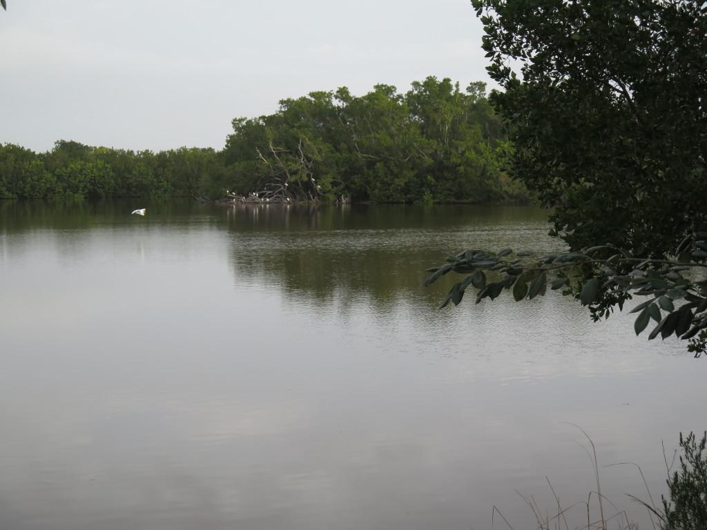 20160216 Everglades IMG_0287