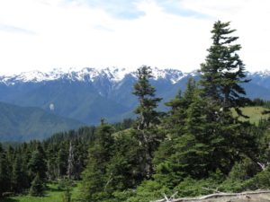 20160702 Olympic NP IMG_0748 (Small)